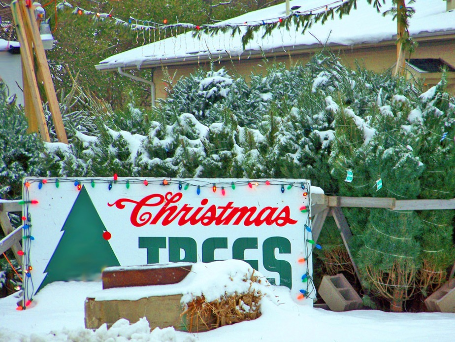 christmas_tree_lot
